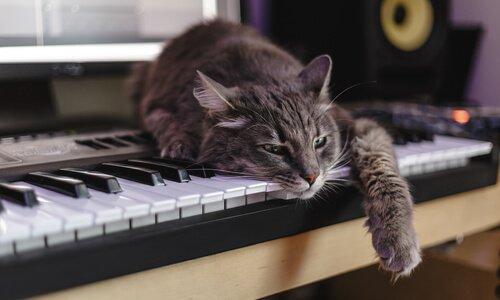 Gato sobre o teclado de um piano