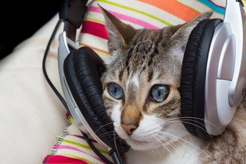 A música também traz benefícios para os gatos?