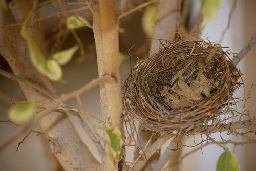 ninho de aves