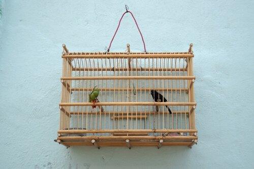 Pássaros em gaiola