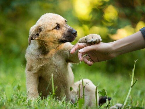 Filhote de cachorro dando a pata
