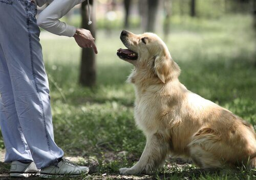 Cachorro sendo adestrado