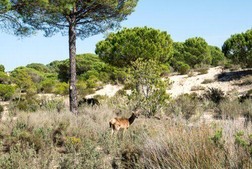 Parque Nacional e Natural de Doñana