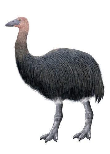 Pássaro elefante, uma ave extinta de Madagascar