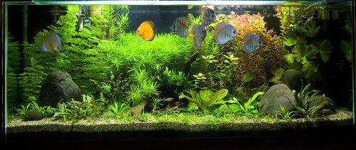 O peixe mais adequado para o seu aquário