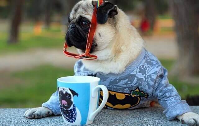 perfis cães no instagram