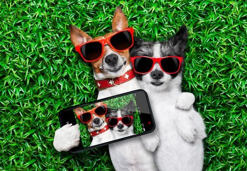 Perfis do Instagram sobre cães mais famosos
