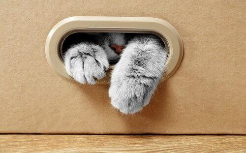 Por que seu gato gosta de caixas de papelão?