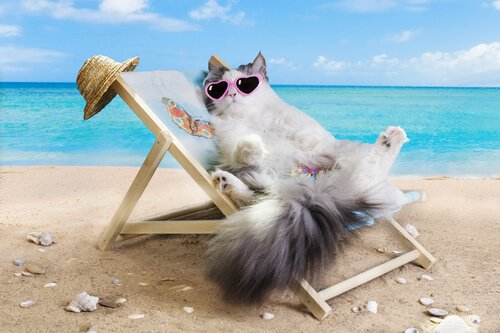 Posso levar meu gato para a praia?