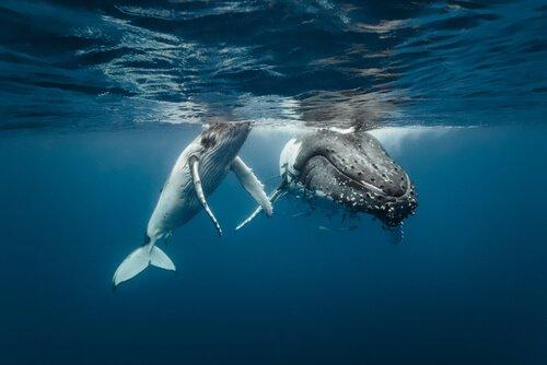 santuário para proteção de baleias