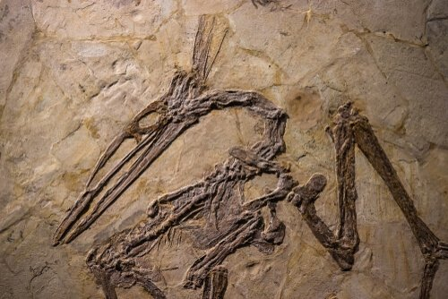 Fósseis de Pterossauro