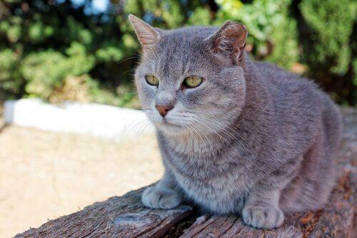 quantos anos um gato vive