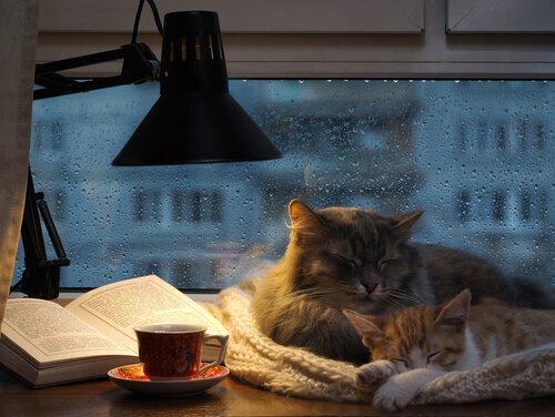 Gatos protegidos da chuva