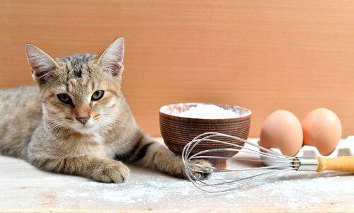 Gato com vasilha de trigo, ovos e fouet