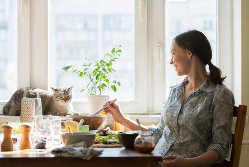 As melhores receitas para gatos exigentes