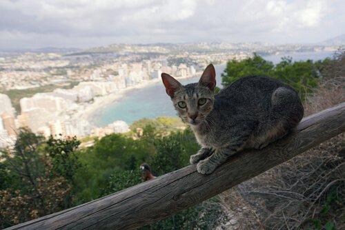 Seu gato tem medo de altura?