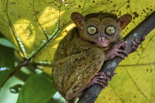 Os 5 animais mais peculiares do mundo