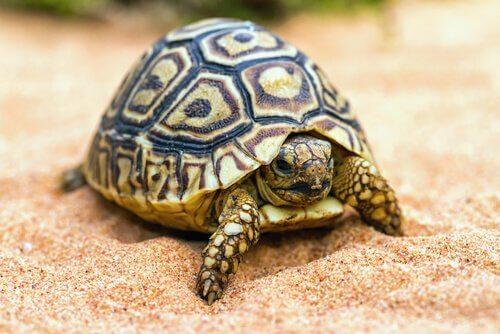 Dicas para ter uma tartaruga de estimação