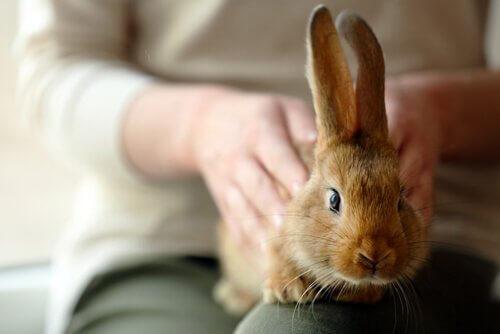 Dicas para ter um coelho de estimação