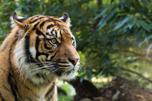A fauna de Sumatra