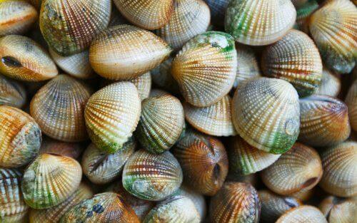 5 tipos de moluscos
