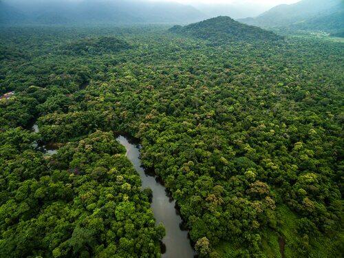 Rio na selva