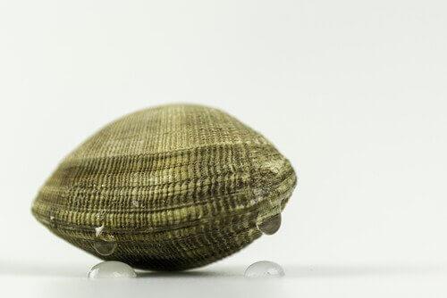 tipos de moluscos