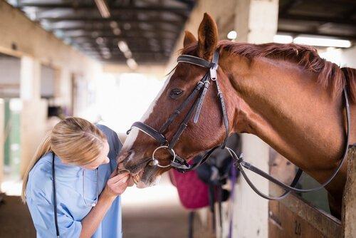Veterinária examinando um cavalo