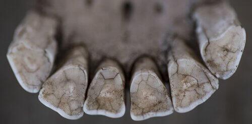 Um veterinário de cavalos de 3000 anos atrás