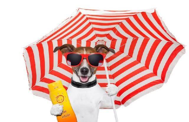 Cachorro com guarda-sol e protetor solar