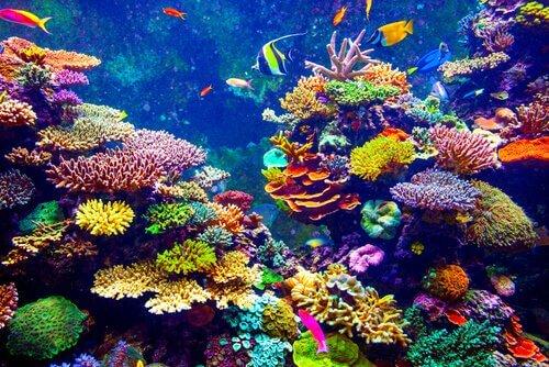 Recifes de coral abrigam grande diversidade