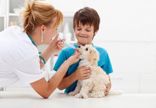 veterinária medicando filhote de cachorro