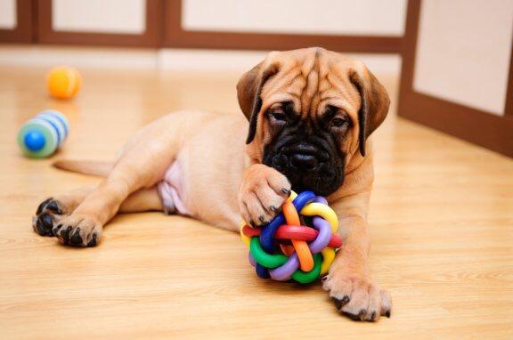 Brincadeiras para fazer em casa com o seu cão
