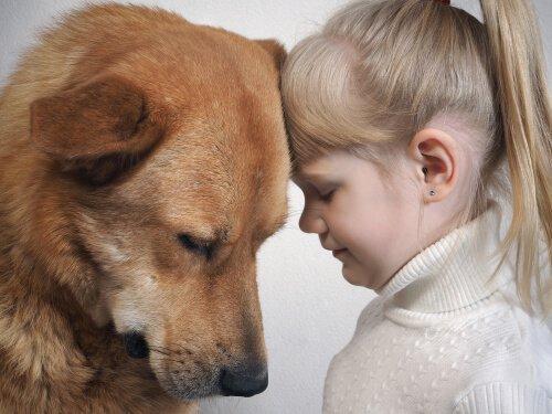 Os cães entendem a expressão no rosto dos humanos?