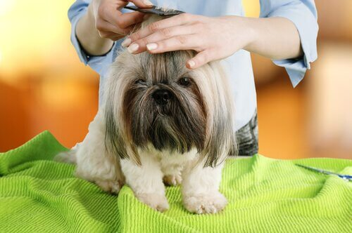 cão no pet shop