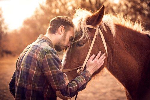 Seu cavalo ama você? Aprenda a reconhecer os sinais