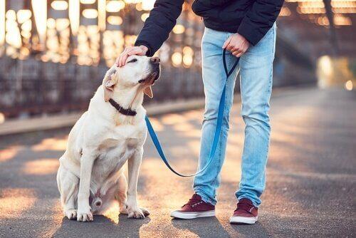 Como escolher o melhor passeador de cães?