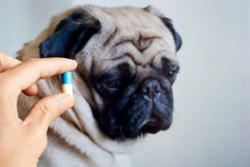 É bom dar antibióticos ao seu animal de estimação?