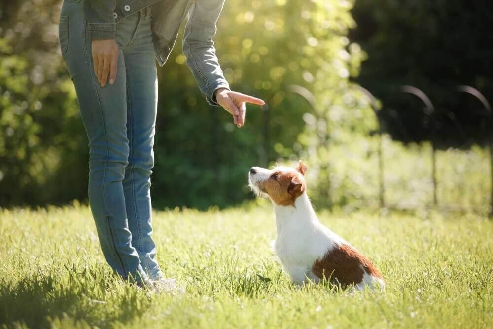 obediência canina