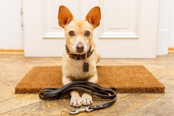 Erros ao educar cães: conheça 7 deles!