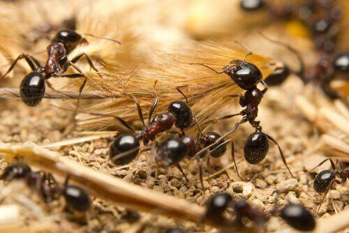 colonias de formigas