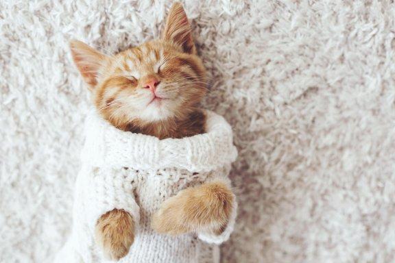 Seu gato não gosta do frio? Dicas para aquecê-lo