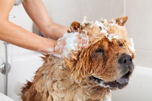 Uso de cosméticos em cães e seus riscos