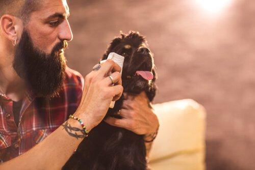 Como limpar os olhos do seu cão