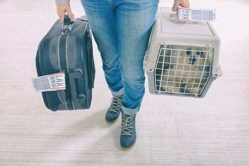 Mulher com mala e cachorro em caixa de transporte