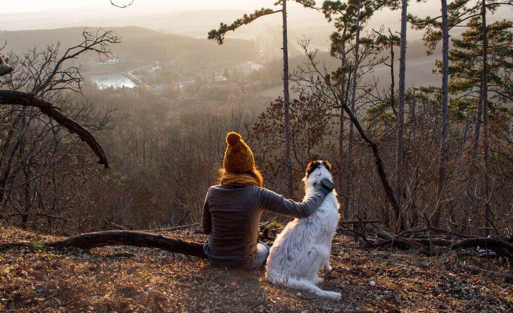 Passeio com cachorro na floresta