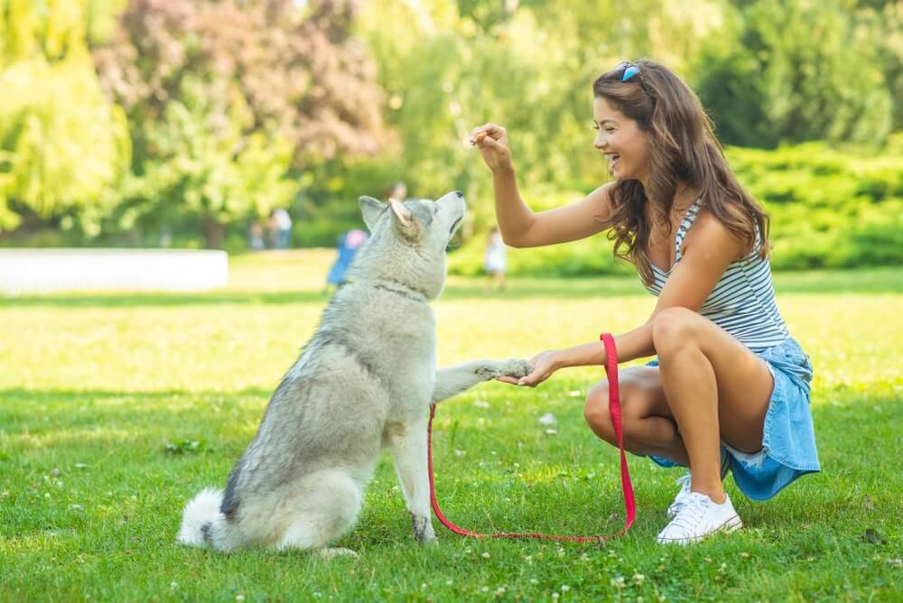 dona adestrando cão surdo