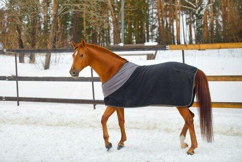 cavalo na neve com agasalho