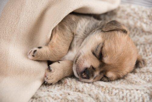 filhote de cão dormindo