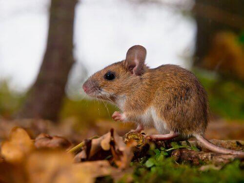 Feromônios nos animais: saiba mais sobre eles